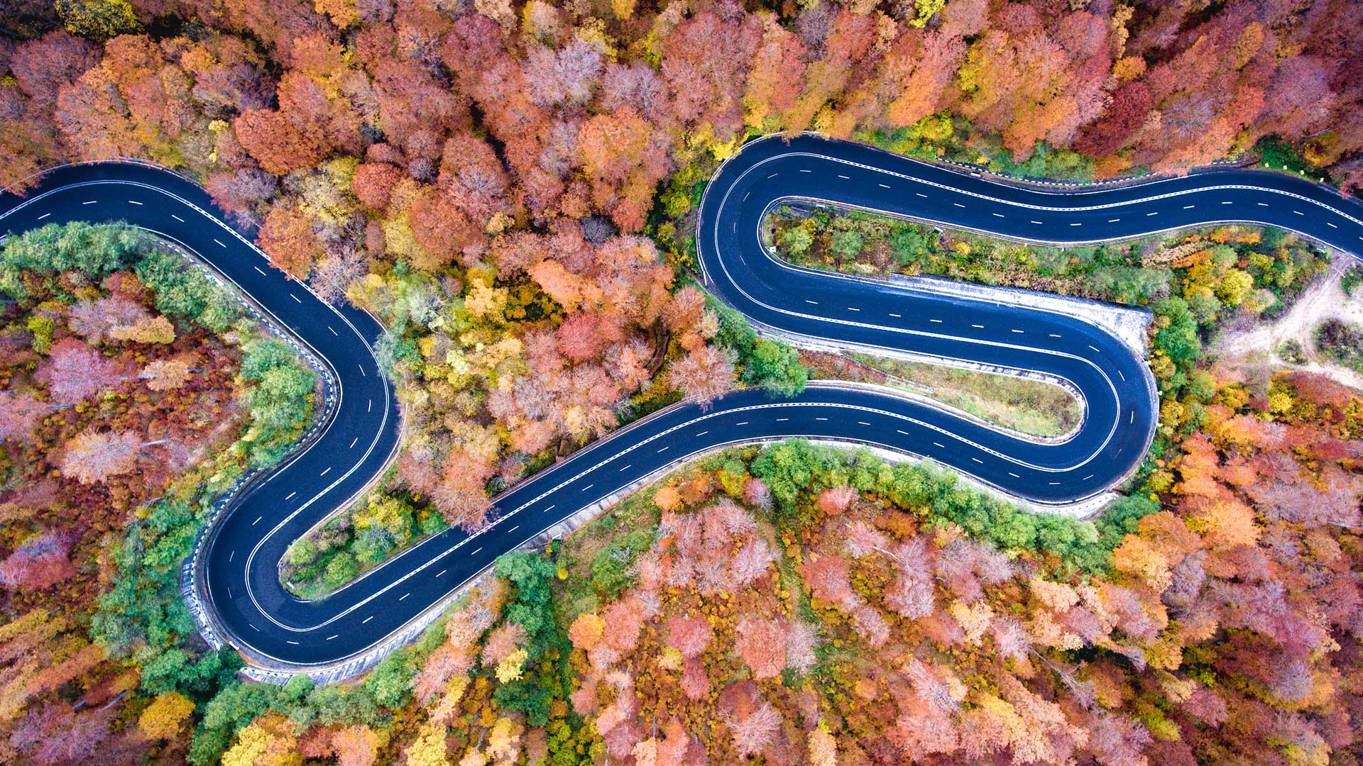 winding road in forest